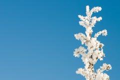 παγωμένο πρωί hoarfrost Στοκ εικόνες με δικαίωμα ελεύθερης χρήσης