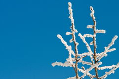 παγωμένο πρωί hoarfrost Στοκ Φωτογραφία