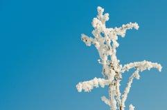 παγωμένο πρωί hoarfrost Στοκ φωτογραφία με δικαίωμα ελεύθερης χρήσης