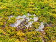Παγωμένο ραγισμένο νερό πάγου στον πράσινο επίγειο χειμώνα χλόης παγωμένο Στοκ εικόνες με δικαίωμα ελεύθερης χρήσης
