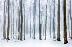 Παγωμένο τοπίο - δάσος χειμερινής υδρονέφωσης Στοκ Εικόνα