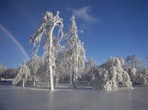 Παγωμένο τοπίο στους καταρράκτες του Νιαγάρα στοκ εικόνες