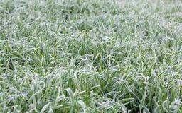 Παγωμένο υπόβαθρο τομέων δημητριακών το χειμώνα Στοκ Φωτογραφίες