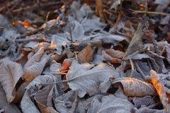 Παγωμένο φθινόπωρο υπόβαθρο φύλλων Στοκ Εικόνες