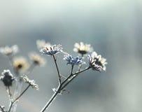 παγωμένο φυτό Στοκ εικόνα με δικαίωμα ελεύθερης χρήσης