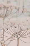 παγωμένο φυτό Στοκ φωτογραφία με δικαίωμα ελεύθερης χρήσης