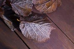 Παγωμένο φύλλο Στοκ εικόνα με δικαίωμα ελεύθερης χρήσης