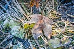 Παγωμένο φύλλο Στοκ εικόνες με δικαίωμα ελεύθερης χρήσης