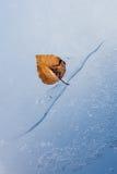 Παγωμένο φύλλο Στοκ Εικόνες