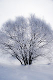 Παγωμένο χειμερινό δέντρο Στοκ Εικόνα