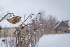 Παγωμένο χειμερινό λιβάδι κοντά επάνω Κρύος καιρός, λεπτομέρειες φύσης Στοκ φωτογραφία με δικαίωμα ελεύθερης χρήσης