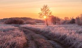 Παγωμένο χειμερινό πρωί νεράιδων Στοκ Εικόνες