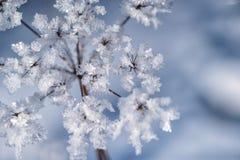 Παγωμένο χειμώνας υπόβαθρο στη φύση, κρύσταλλα παγώματος στη χλόη, μακρο φωτογραφία στοκ φωτογραφία με δικαίωμα ελεύθερης χρήσης