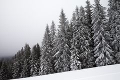 Παγωμένο χιονισμένο κομψό δάσος στην ομίχλη και τη χιονώδη κλίση Στοκ Φωτογραφία