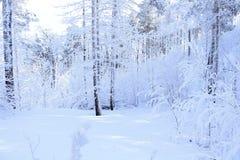 Παγωμένο χιονώδες δάσος Στοκ Εικόνα