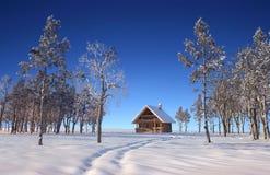 παγώνοντας χειμώνας δέντρων χιονιού υπολοίπων εδάφους ημέρας Στοκ Εικόνες