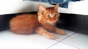 Παιδί γατακιών στοκ φωτογραφίες