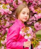 Παιδί που απολαμβάνει το ρόδινο άνθος κερασιών r Το ροζ είναι το πιό κοριτσίστικο χρώμα Φωτεινός και δονούμενος Το ροζ είναι η συ στοκ φωτογραφία με δικαίωμα ελεύθερης χρήσης