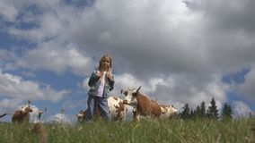 Παιδί της Farmer με τα βοοειδή στο λιβάδι, το κορίτσι τουριστών και τα ζώα αγελάδων στα βουνά στοκ φωτογραφία με δικαίωμα ελεύθερης χρήσης