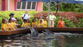 Παιδιά καλοκαιρινό εκπαιδευτικό κάμπινγκ που παίζουν με τα δελφίνια σε Seaworld απόθεμα βίντεο
