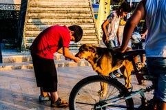 Παιδιά με τα σκυλιά οδών στην τουρκική θερινή πόλη - Τουρκία Στοκ εικόνα με δικαίωμα ελεύθερης χρήσης