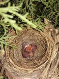 Παιδιά πουλιών Στοκ φωτογραφίες με δικαίωμα ελεύθερης χρήσης