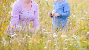 Παιδιά που επιλέγουν τα λουλούδια σε ένα λιβάδι στοκ φωτογραφίες με δικαίωμα ελεύθερης χρήσης