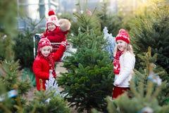 Παιδιά που επιλέγουν το χριστουγεννιάτικο δέντρο Αγορές δώρων Χριστουγέννων Στοκ Φωτογραφίες