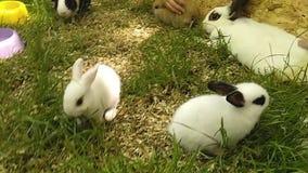 Παιδιά που παίζουν με λίγο κουνέλι σε έναν χορτοτάπητα με την πράσινη χλόη Φιλία μεταξύ των παιδιών και των κατοικίδιων ζώων απόθεμα βίντεο
