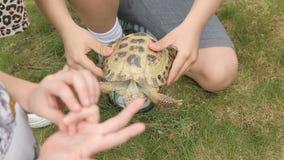 Παιδιά που παίζουν με μια χελώνα απόθεμα βίντεο