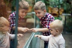 Παιδιά που προσέχουν τα ερπετά στο terrarium μέσω του γυαλιού στοκ εικόνες