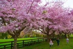 Παιδιά που τρέχουν και που απολαμβάνουν τα άνθη στοκ φωτογραφία