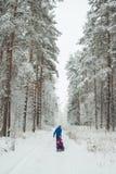 Παιδιά ρόλων μπαμπάδων σε ένα snowcat όμορφος χιόνι-όρμος χειμερινών πεύκων στοκ εικόνες