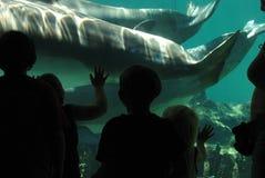 Παιδιά στο ενυδρείο ψαριών στοκ φωτογραφίες