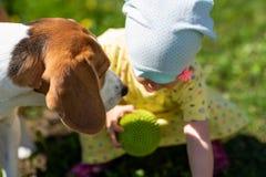 Παιχνίδια κοριτσάκι με το σκυλί λαγωνικών στοκ φωτογραφία