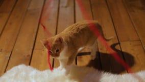 παιχνίδι γατακιών κοριτσιών Κόκκινη σφαίρα του νήματος Δώρο Χριστουγέννων Εγχώρια άνεση φιλμ μικρού μήκους