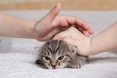 παιχνίδι γατακιών παιδιών Στοκ φωτογραφίες με δικαίωμα ελεύθερης χρήσης