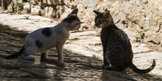 Παιχνίδι γατών γατακιών Στοκ εικόνα με δικαίωμα ελεύθερης χρήσης