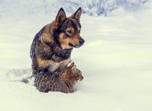 Παιχνίδι γατών και σκυλιών μαζί στο χιόνι το χειμώνα Στοκ φωτογραφίες με δικαίωμα ελεύθερης χρήσης