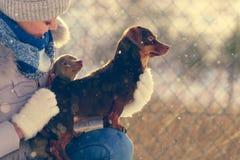 Παιχνίδι γυναικών με τα σκυλιά κατά τη διάρκεια του χειμώνα στοκ εικόνες με δικαίωμα ελεύθερης χρήσης