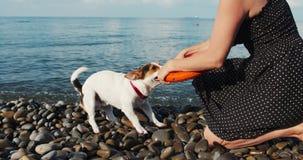 Παιχνίδι γυναικών με το σκυλί της απόθεμα βίντεο