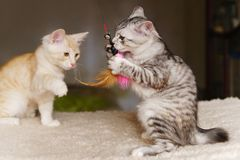 Παιχνίδι δύο γατακιών με το παιχνίδι Στοκ φωτογραφία με δικαίωμα ελεύθερης χρήσης