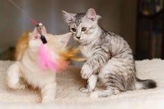 Παιχνίδι δύο γατακιών με το παιχνίδι Στοκ εικόνα με δικαίωμα ελεύθερης χρήσης