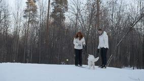 Παιχνίδι ζεύγους με το σκυλί στο χειμερινό δάσος απόθεμα βίντεο