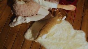 Παιχνίδι κοριτσιών με ένα γατάκι Κόκκινη σφαίρα του νήματος Δώρο Χριστουγέννων Εγχώρια άνεση απόθεμα βίντεο