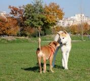 παιχνίδι πάρκων σκυλιών Στοκ φωτογραφίες με δικαίωμα ελεύθερης χρήσης