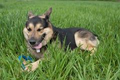 παιχνίδι παιχνιδιού σκυλ&i Στοκ εικόνα με δικαίωμα ελεύθερης χρήσης