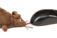 παιχνίδι ποντικιών υπολο&ga Στοκ εικόνες με δικαίωμα ελεύθερης χρήσης