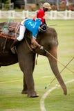 Παιχνίδι πόλο ελεφάντων. Στοκ εικόνα με δικαίωμα ελεύθερης χρήσης