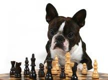 παιχνίδι σκακιού Στοκ εικόνα με δικαίωμα ελεύθερης χρήσης